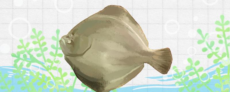 比目鱼又叫什么鱼,生活在哪里