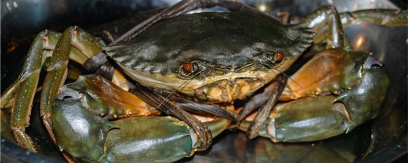 观赏蟹能和什么鱼混养,怎么混养才没问题