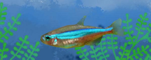 绿莲灯鱼好养吗,怎么养