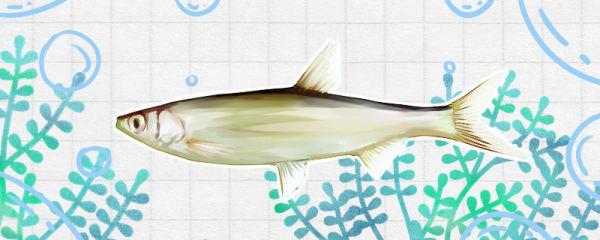 河里常见的小鱼品种有哪些,什么鱼比较多见