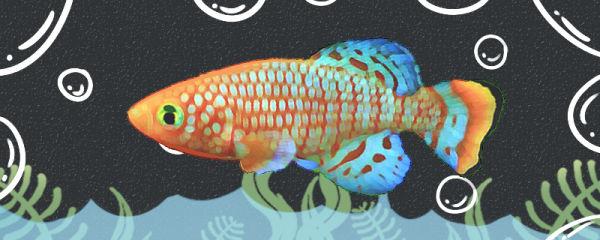 漂亮宝贝鱼好养吗,怎么养