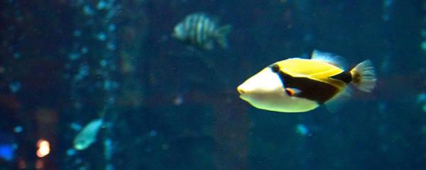 鱼缸养鱼用什么水养最好,鱼对水有哪些要求