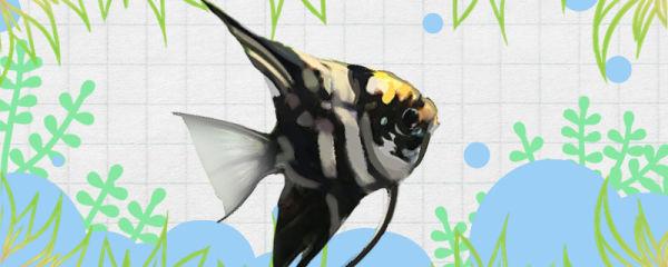 冬天养鱼要加热棒吗,养什么鱼用加热棒