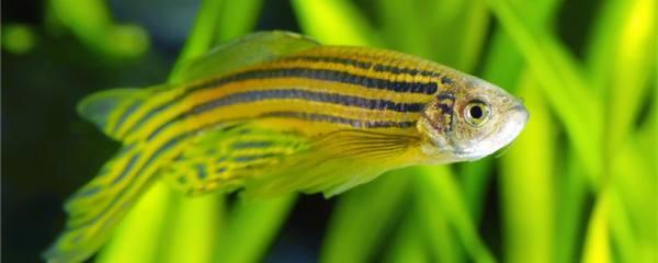20公分深的水适合养鱼吗,浅水鱼缸养什么鱼