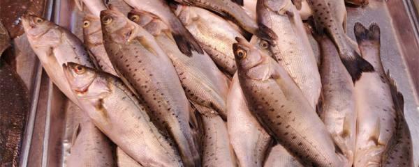 鲈鱼多少钱一斤,鲈鱼有哪些品种
