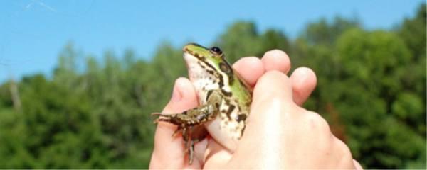 青蛙可以在水里生活吗,可以在水中呼吸吗