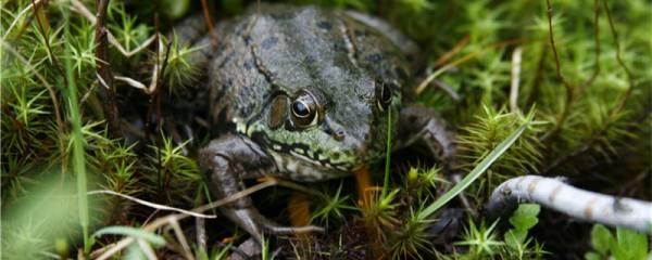 青蛙有指头吗,有几个指头