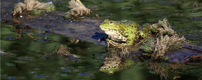青蛙有牙齿吗,有心脏吗
