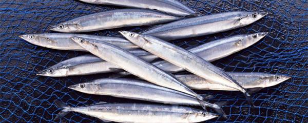 秋刀鱼多少钱一斤,秋刀鱼怎么看新不新鲜
