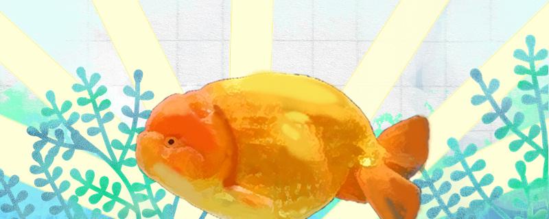 鱼有几秒钟的记忆,鱼类有什么特征-轻博客