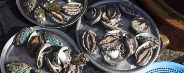 鲍鱼生长在深海还是浅海,有养殖的吗