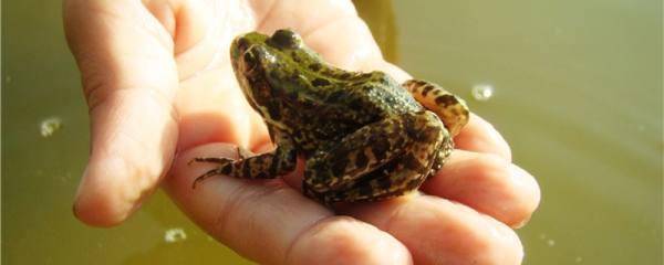 青蛙用什么辨别气味,用什么游泳