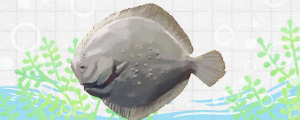 多宝鱼多少钱一斤,多宝鱼怎么看是否新鲜