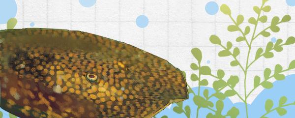 泰鲁魟鱼好养吗,怎么养