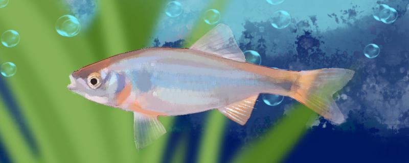 彩虹精灵鱼好养吗,怎么养