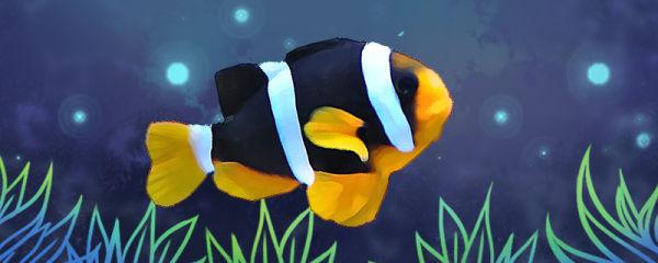 双带小丑鱼好养吗,怎么养