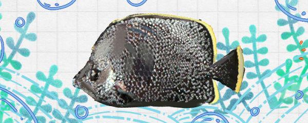 绣蝴蝶鱼好养吗,怎么养