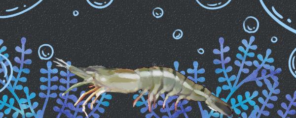 淡水虾和海水虾一样吗,有什么区别