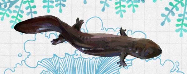 娃娃鱼能用自来水养吗,放自来水里会死吗