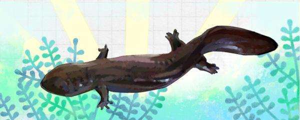 娃娃鱼离开水还能活吗,离开水能活多长时间
