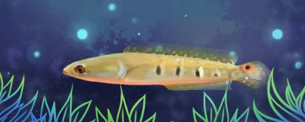 养什么鱼不用打氧气,什么鱼耗氧低