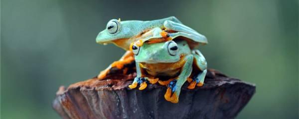 树蛙和青蛙一样吗,有什么区别