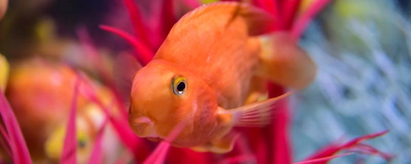 鱼缸水管里面的脏东西怎么清理,为什么水管会变脏