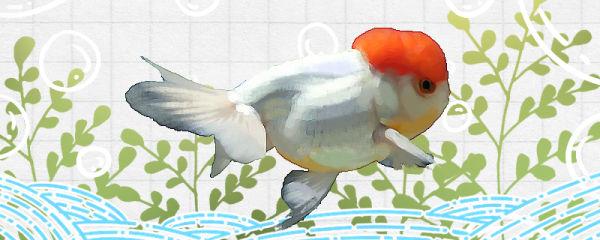 冬天金鱼会不会冷死,需要加热吗