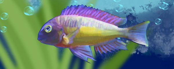 红彩虹蝴蝶鱼好养吗,怎么养