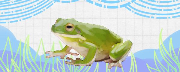 海里有青蛙吗,青蛙生活在哪里