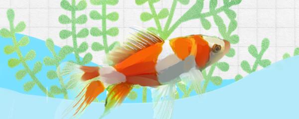 金鱼喜欢老水还是新水,多久换一次水