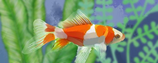 金鱼需要打氧吗,需要一直打氧吗