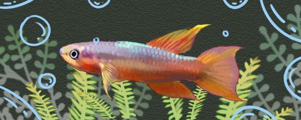 三叉琴尾鱼好养吗,怎么养