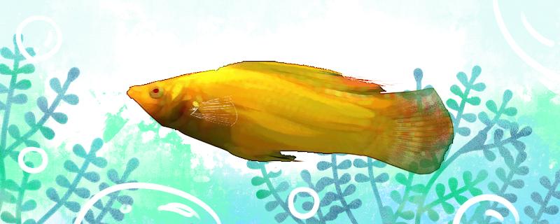 摩利鱼好养吗,怎么养