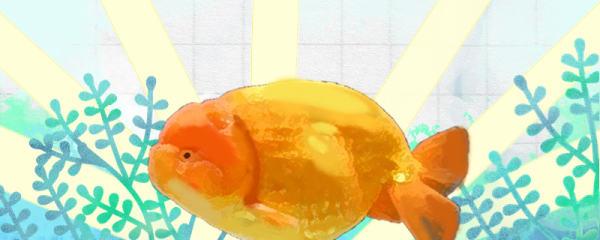 金鱼过冬有哪些注意事项,能放室外过冬吗