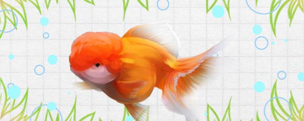金鱼耗氧量大吗,一晚上不打氧会死吗