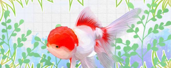 金鱼吃水面泡泡正常吗,怎么解决