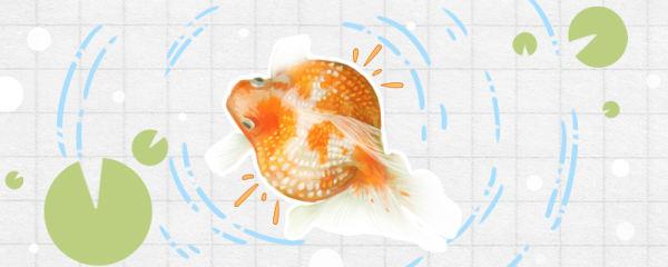 金鱼要不要睡觉,一天睡几个小时