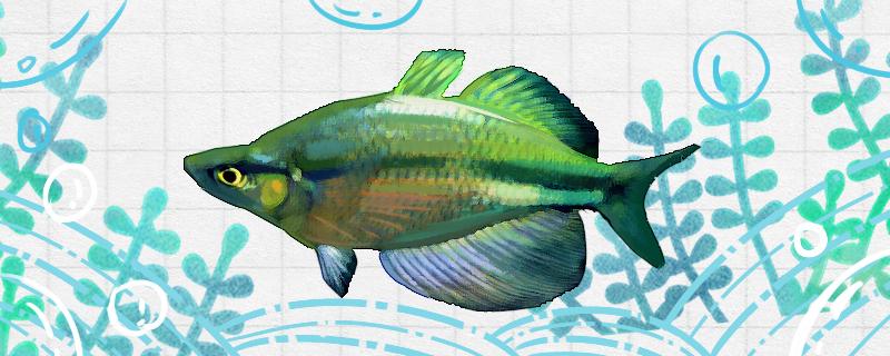 大帆绿苹果美人鱼好养吗,怎么养