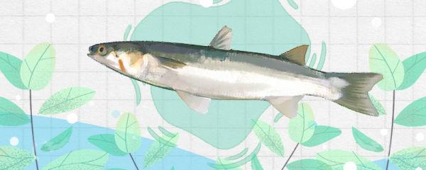 梭鱼刺多吗,和鲈鱼哪个刺少