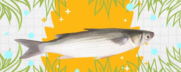 乌头鱼是海鱼还是淡水鱼,生活在哪里