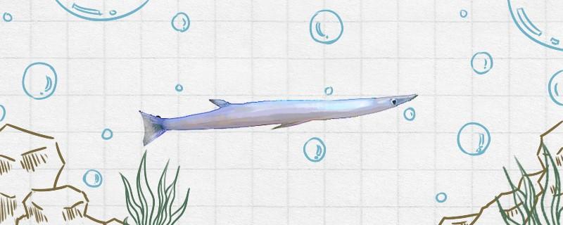 银鱼有刺吗,刺多吗