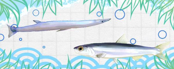 丁香鱼和银鱼一样吗,有什么区别