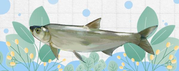 翘嘴鱼和白条鱼一样吗,有什么区别