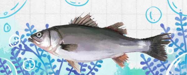 鲈鱼和桂鱼一样吗,有什么区别