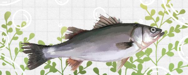鲈鱼是海鱼吗,生长在哪里
