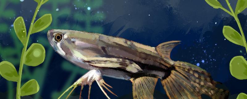 古代蝴蝶鱼好养吗,怎么养