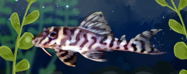 国王虎斑异型鱼好养吗,怎么养