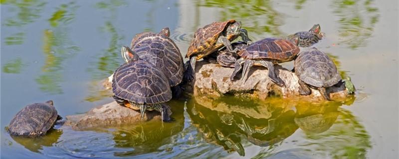怎样解决养乌龟水臭问题,为什么会发臭