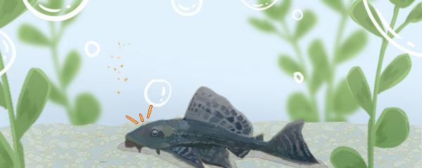 清理鱼缸的工具鱼有哪些,养什么工具鱼比较好